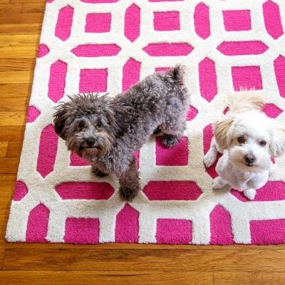 Hot pink rug @dessertfortwo