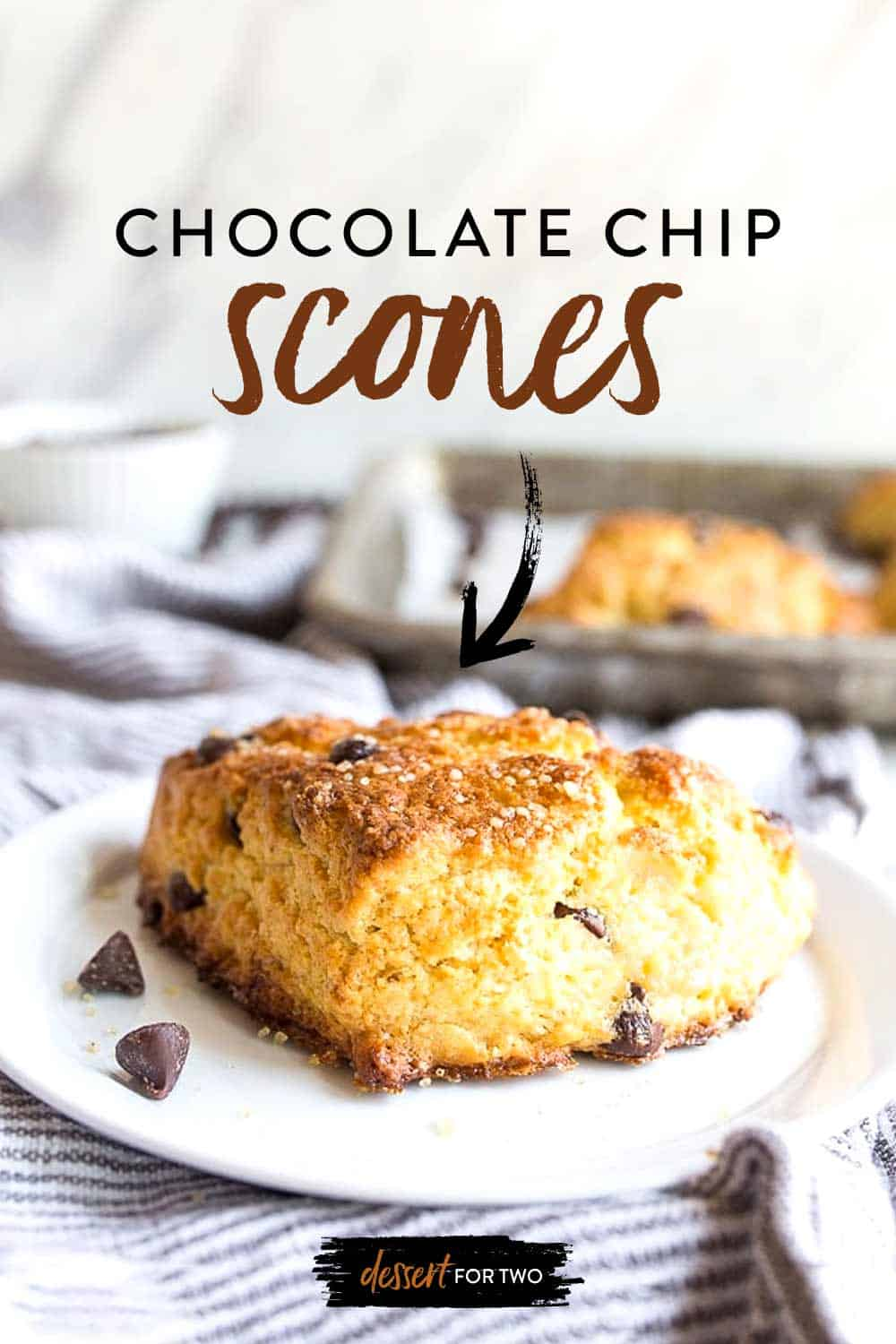 single chocolate chip scone on white plate